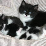 4 kittens in a bean bag.