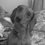 My Puppy!!