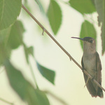 A Brown Hummer