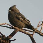 A Dark Bird