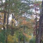 A Fall Foot-Path
