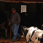 The Fading away of the Maine Dairy Farmers
