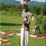 A Scarecrow  by the Garden