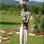 A Scarecrow  by the Garden