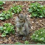Little Squirrel