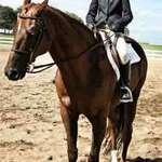 Equestrian Series 1