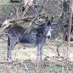 Donkey #1