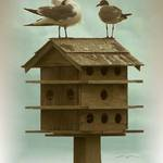 Laughing Gulls on Birdhouse
