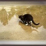 Reflecting Sassy
