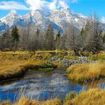 Autum in Schwabacher Landing, Grand Teton NP