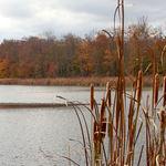 Autumn at Black Creek