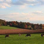 October Pastoral