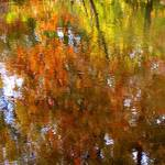 foliage reflection 2
