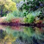 pond impressions