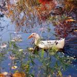 floating through autumn