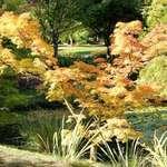 Tree in Autumn Dress, Leafy Glade beyond