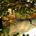Reflective Autumn Hues