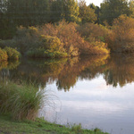 Autumn reflections Whakamaru