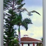 Punta Gorda Gazebo