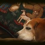 Baxter Dreamin
