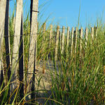 Beach dune fence