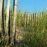 Beach dune fence