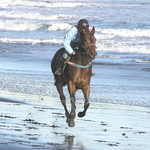 Beach Horse