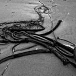 Seaweed, Bandon, Oregon