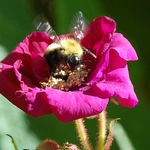Bee All A Flutter
