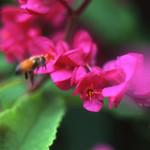 Impressionist Bee