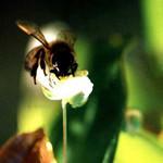 Bee Study 48