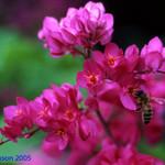 Bee study  03