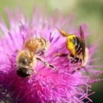 2 bees workin