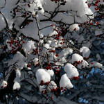 Snowy Berry Tree