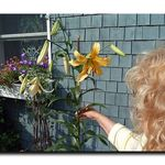 Beside the Giant Lily