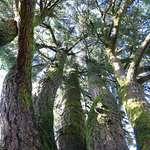 Big tree new angle