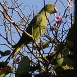Parakeet Breakfast