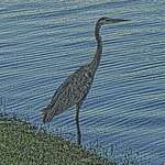 Filtered Bird