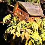 Birdhouse & Wisteria vine, in winter sunlight