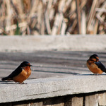 Birds on Boardwalk