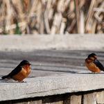 Birds on Boardwalk