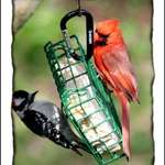Woodpecker and Cardinal