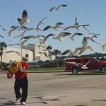 Gourmet Gulls