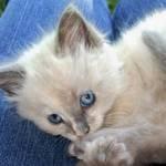 Blue Eyed Sassy