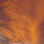 Boambee Sky 110112 030
