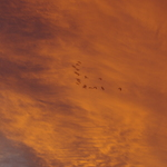 Boambee Sky 110112 031