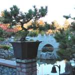 Bonsai, Bell & Bridge