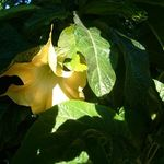 Botanic mysticism