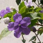 Botanical Flower