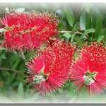 Bottle Brush 2